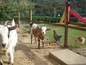 Annunci for Recinto elettrico per capre